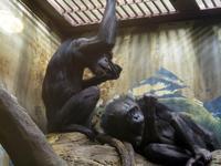 チンパンジー舎の隣の小さな森[天王寺動物園] - a diary of primates