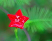 少林山達磨寺で花と虫 - 星の小父さまフォトつづり