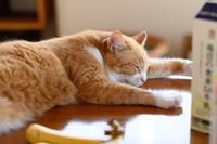 お疲れさま - 猫と夕焼け