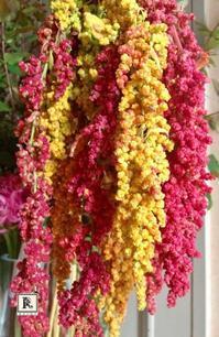 創業150年記念松屋銀座「秋の感謝祭」9月6日(金)・7日(土) - Bouquets_ryoko