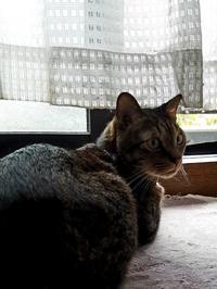 見返り美人 - キジトラ猫のトラちゃんダイアリー