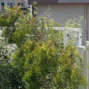 ただ今、ハーブ教室の更新中 - sola og planta ハーバリストの作業小屋