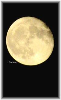 月橘 - おだやかに たのしく Que Sera Sera