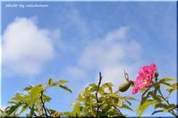 台風一過「百合が原公園」 - 北海道photo一撮り旅