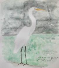 #野鳥スケッチ #ネイチャー・ジャーナル 『大鷺』Ardea alba - スケッチ感察ノート (Nature journal)