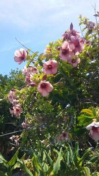 お友達の家の植物たち - Nature Care