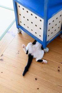 最近のホイちゃんの写真と、「うげげぇ~」な話 - 猫と夕焼け