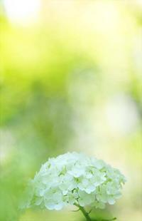 8月18日今日の写真 - ainosatoブログ02