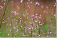 3時になると咲く花 - ハチミツの海を渡る風の音
