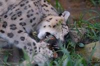 8月17日サマーナイトのミルチャ - 動物園に嵌り中2