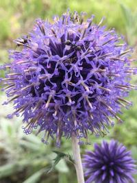 黄色から紫  8.13〜8.14 - ヘブンリーブルーの咲く朝に