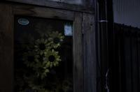 Depressed   sunflower - HTY photography club