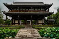 東福寺の蓮 - 鏡花水月