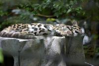 横は薄い猫 - 動物園へ行こう