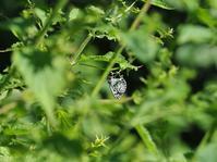 盛夏の定番コース - 蝶超天国