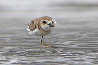 お控えなすって、 - 季節の野鳥~Wildbirds archives