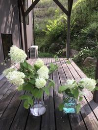 フラスコの花たちとドライになった紫陽花 - CROSSE 便り
