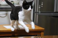 はちわれくりちゃん痩せの大食い - gin~tetsu~nosuke