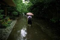 良い雨が降った。 - Yoshi-A の写真の楽しみ