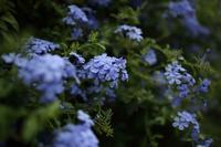 青い - 月曜日はサーフィン・カリアゲくんのブログ
