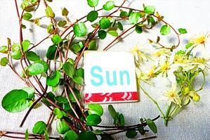 日曜日午前の診療を開始します! - 横浜市南区弘明寺整形外科リハビリ「原整形外科医院」のブログ