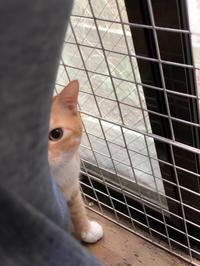 生き残り - 愛犬家の猫日記