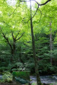 樹々の息吹と自然界の残酷 - I shall be released