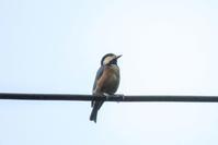 高知でちょっと探鳥&のいち動物公園 - 週末バーダーのBirding記録