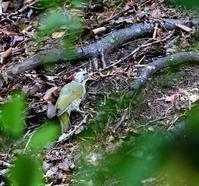 北摂山間の野鳥たちは・・・ - 一期一会の野鳥たち