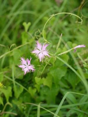 箱根湿生花園の花々 -