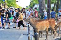 奈良 - 新・旅百景道百景