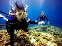 夏空の石垣島でペット同伴のファミリー体験ダイビング! - 石垣島てぃだダイビングサービス