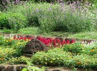 散歩2019.8.21四季の森公園の花 - Gonta2019's Blog