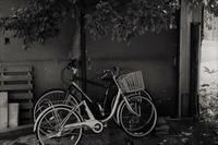 自転車2景 - フォトな日々