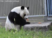 2019年8月王子動物園3その6トワイライトズー4 - ハープの徒然草