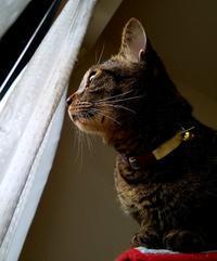 下からのアングル - キジトラ猫のトラちゃんダイアリー