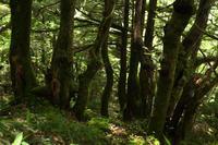 湿原⑦木漏れ日 - 風の彩り-2