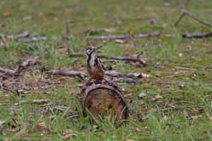 オオアカゲラ 幼鳥 - やぁやぁ。