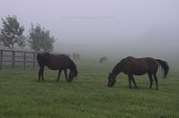 霧朝の馬牧場 - ekkoの --- four seasons --- 北海道