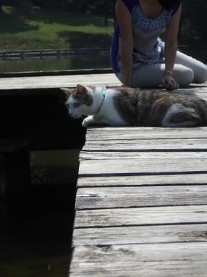 ピクニック猫と。 - オルガニスト愛のイタリア山小屋生活