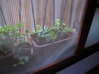 植物-中川製作所- - 美術・中川製作所