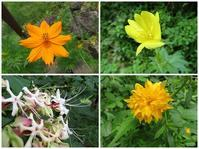 散歩2019.8.22②四季の森公園の花など - Gonta2019's Blog