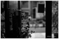 leaf - BobのCamera