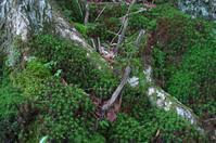 大峰山で出会った風景-5 - 自然と仲良くなれたらいいな2