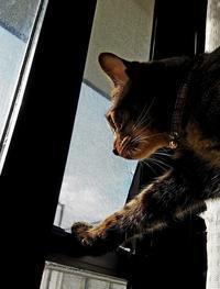 むむ! - キジトラ猫のトラちゃんダイアリー