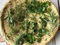 鉢植えのハーブ - やせっぽちソプラノのキッチン2