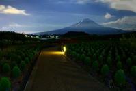 令和元年8月の富士(18)大石公園のコキアと富士 - 富士への散歩道 ~撮影記~