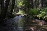 Forest Green(1) - 一人の読者との対話