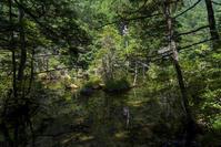 Forest Green(3) - 一人の読者との対話