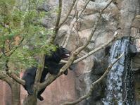 木の上、滝と - bonsoir